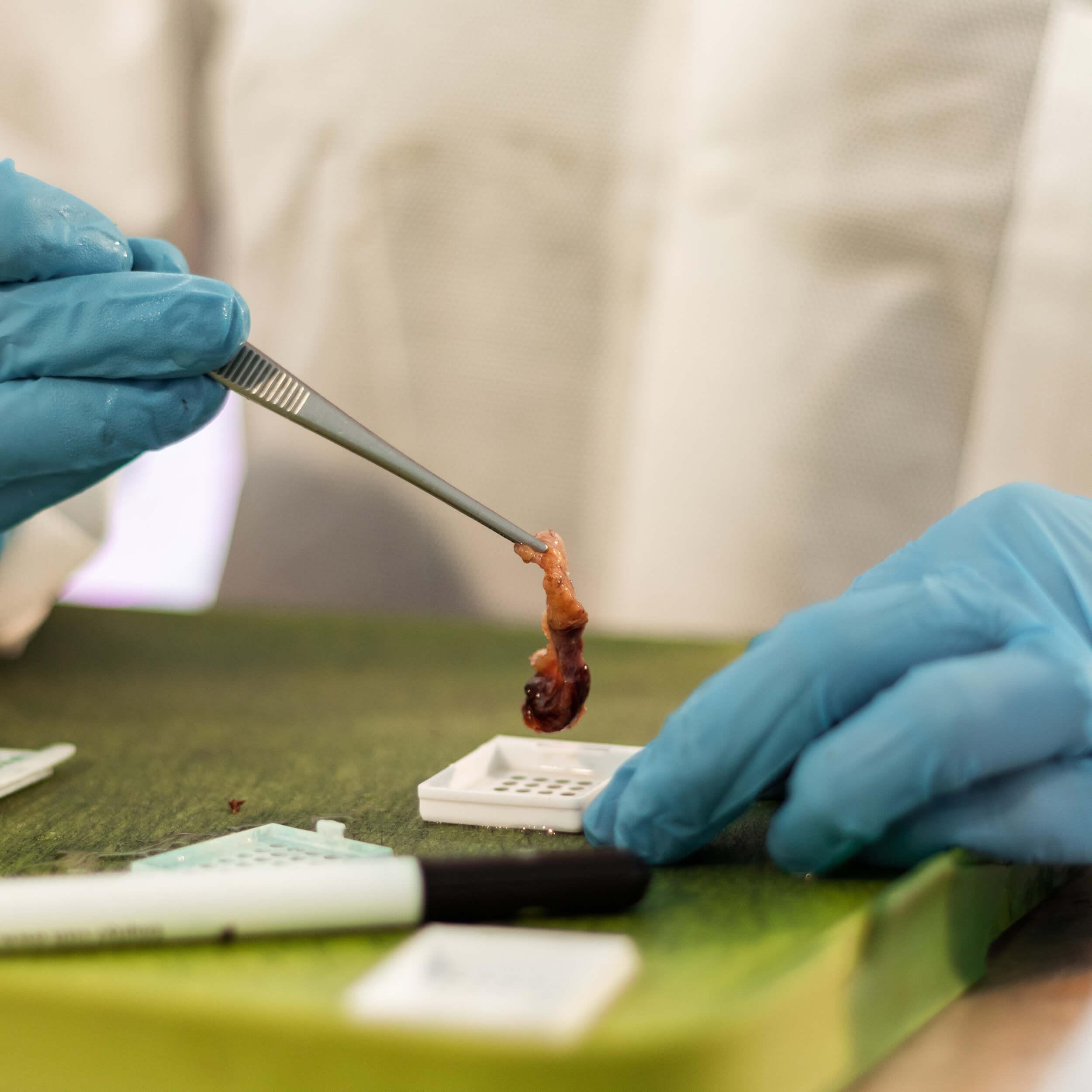 Pathology Website Photos-101